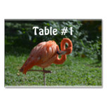 Perfect Pink Flamingo Table Number