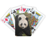 Petulant Panda Bear Bicycle Playing Cards