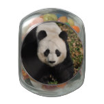 Petulant Panda Bear Glass Jar