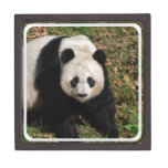 Petulant Panda Bear Jewelry Box