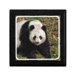 Petulant Panda Bear Keepsake Box