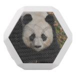 Petulant Panda Bear White Bluetooth Speaker