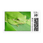 Picture of a Tree Frog Postage Stamp