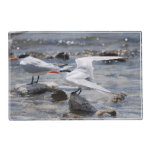 Posing Royal Tern Placemat