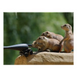 Prairie Dog Soldiers Poster