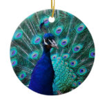 Pretty Peacock Ornament
