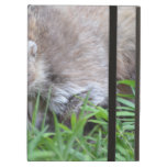 Prowling Coati Case For iPad Air
