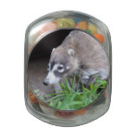 Prowling Coati Glass Candy Jar