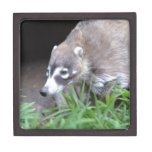 Prowling Coati Jewelry Box