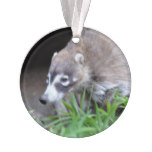 Prowling Coati Ornament