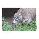 Prowling Coati Placemat