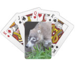 Prowling Coati Playing Cards