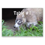 Prowling Coati Table Number