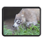 Prowling Coati Trailer Hitch Cover