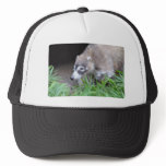 Prowling Coati Trucker Hat