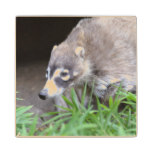 Prowling Coati Wood Coaster