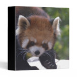 Prowling Red Panda Binder