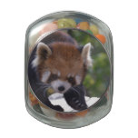 Prowling Red Panda Glass Jar