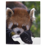 Prowling Red Panda Plaque