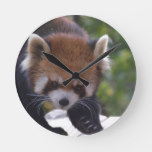 Prowling Red Panda Round Clock