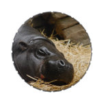 Pygmy Hippo Jelly Belly Candy Tin