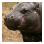 Pygmy Hippo Poster