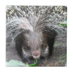Quilled Porcupine Tile