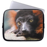 Resting Red Ruffed Lemur Computer Sleeve