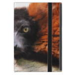 Resting Red Ruffed Lemur Cover For iPad Mini