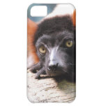 Resting Red Ruffed Lemur Cover For iPhone 5C