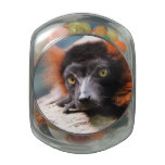 Resting Red Ruffed Lemur Glass Candy Jars