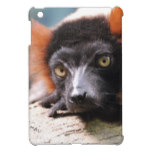 Resting Red Ruffed Lemur iPad Mini Cases