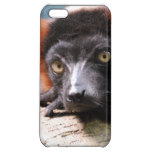 Resting Red Ruffed Lemur iPhone 5C Cover