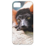 Resting Red Ruffed Lemur iPhone SE/5/5s Case