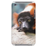 Resting Red Ruffed Lemur iPod Touch Cover