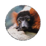 Resting Red Ruffed Lemur Jelly Belly Tin