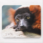 Resting Red Ruffed Lemur Mouse Pad