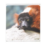 Resting Red Ruffed Lemur Notepad