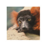Resting Red Ruffed Lemur Wood Wall Decor
