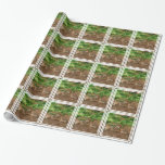 Resting Red Wolf Wrapping Paper