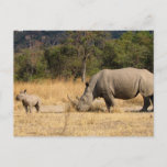 Rhinoceros Family Postcard