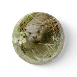 River Otter Habitat Button