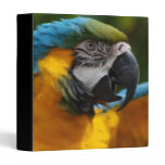 Ruffled Blue and Gold Macaw 3 Ring Binder