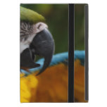 Ruffled Blue and Gold Macaw Cover For iPad Mini