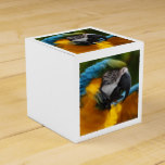 Ruffled Blue and Gold Macaw Favor Box
