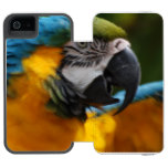 Ruffled Blue and Gold Macaw iPhone SE/5/5s Wallet Case