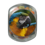 Ruffled Blue and Gold Macaw Jelly Belly Candy Jar