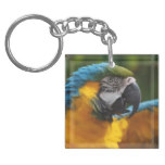 Ruffled Blue and Gold Macaw Keychain