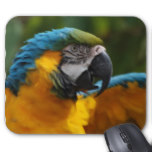 Ruffled Blue and Gold Macaw Mouse Pad