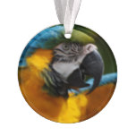 Ruffled Blue and Gold Macaw Ornament